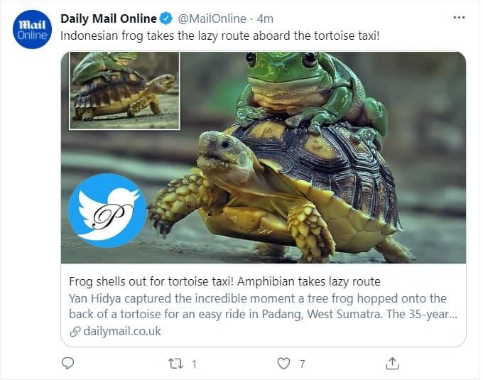 قورباغه و لاکپشت