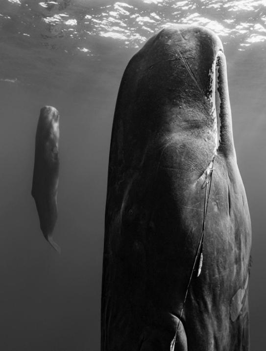 خواب عجیب نهنگ ها در اعماق اقیانوس