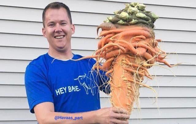 سنگین ترین هویج دنیا