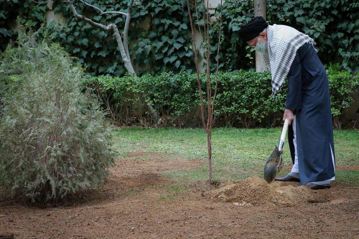 رهبر انقلاب امسال چه درختهایی کاشتند؟