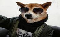 سگی که مدلینگ است! +تصاویر