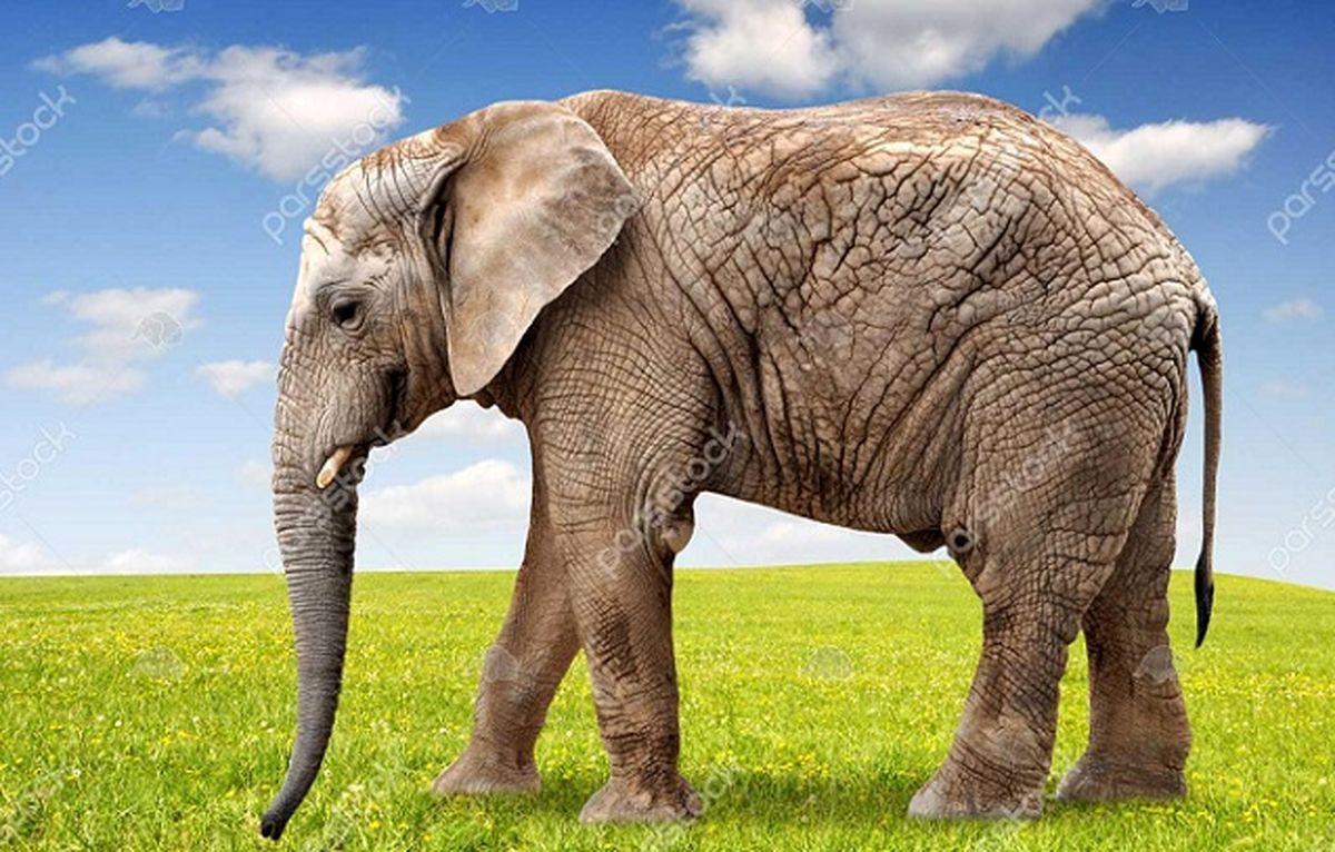 لحظه زایمان عجیب یک فیل در باغ وحش ارم + تصاویر