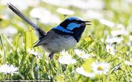 تا به حال دیده اید که پرندهای عینک آفتابی بزند؟ +تصاویر