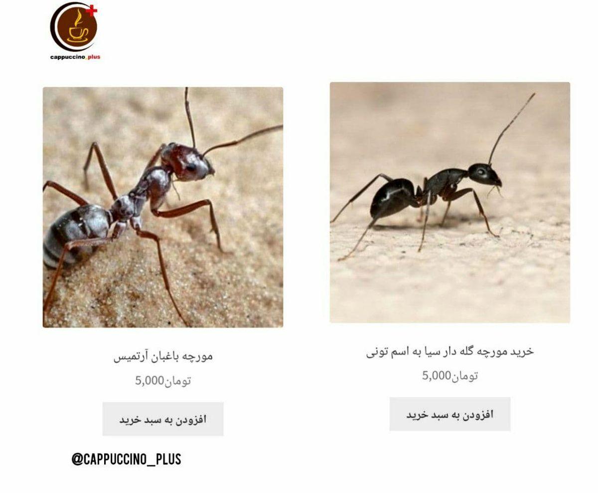 فروش مورچه گله دار و باغبان! +عکس
