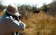 صدور «مجوز شکار ویژه» از سر گرفته شد