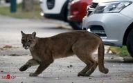 تصاویر: حیوانات در پرسه کرونایی