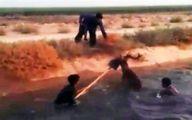 نجات خشونتآمیز گوزن زرد ایرانی از کانال آب +تصاویر
