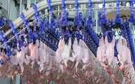 معاون وزیر کشاورزی: ناچار به افزایش قیمت مرغ بودیم
