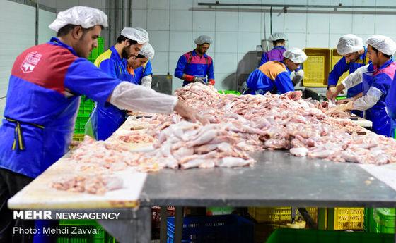 افزایش ۴۵۰۰ تومانی قیمت مرغ در آستانه 13بدر