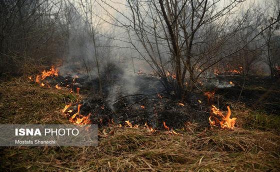تصاویر: حریق ۵ هکتار از اراضی جنگلی شهرستان نکا