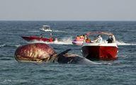 تصاویر: مرگ دومین نهنگ به گل نشسته در جزیره کیش
