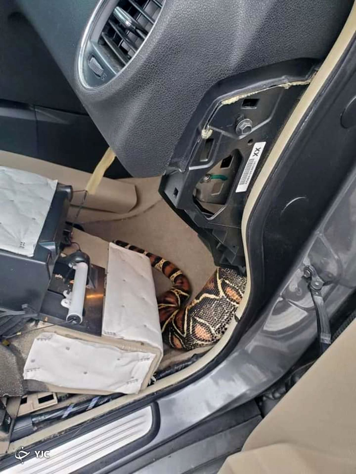 صحنه شوکه کننده که راننده در ماشین دید!+عکس