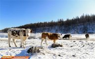 تصاویر: فصل سرما در طبیعت مغولستان!