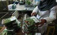 سبزی ارزان میشود