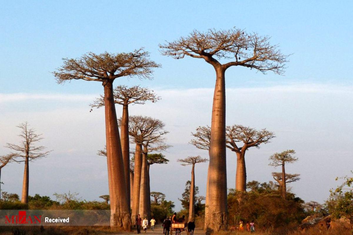 تصاویر: جنگلهای بی نظیر جهان