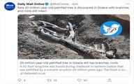 کشف عجیب درخت ۲۰ میلیون ساله در یونان! +عکس