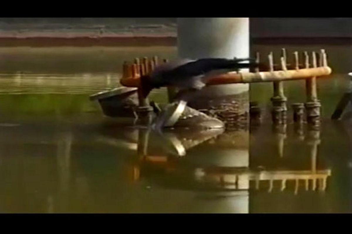 فیلم: طعمه گذاشتن کلاغ باهوش ایرانی برای شکار ماهی!