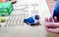 فیلم: باهوشترین پرنده جهان را ببینید!