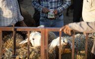 هشدار شیوع تب کریمه کنگو در عید قربان/ تعداد مبتلایان به ۸ نفر رسید