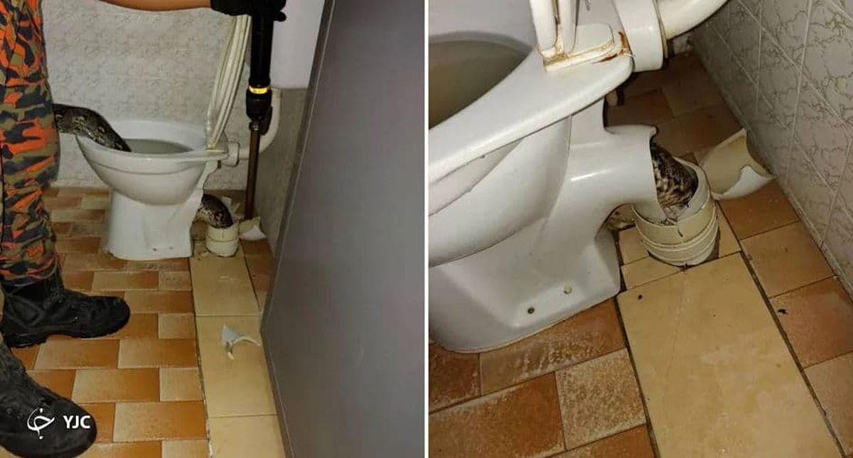 حمله مار غول پیکر به صاحبخانه در توالت! +عکس