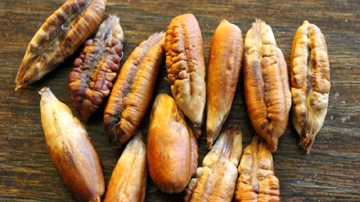 دستورالعمل طبیعی برای لاغری از هسته خرما