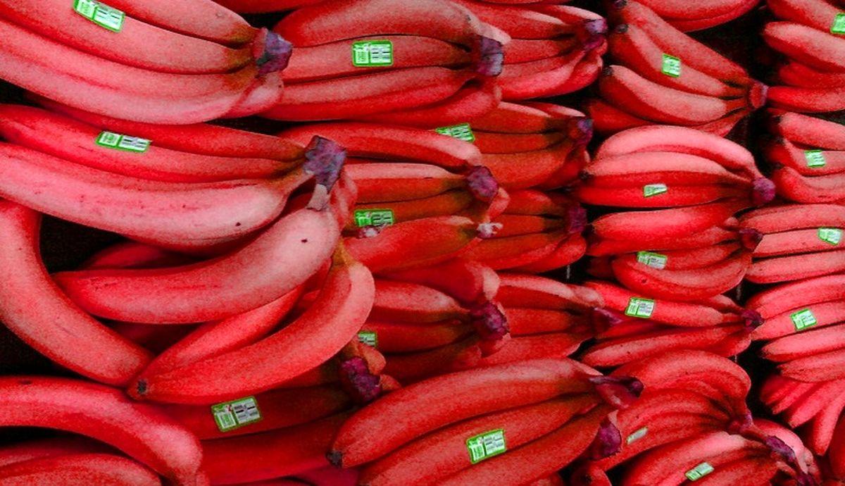 موز قرمز کیلویی ۱۸۳ هزار تومان!/ کاشت در تنکابن!