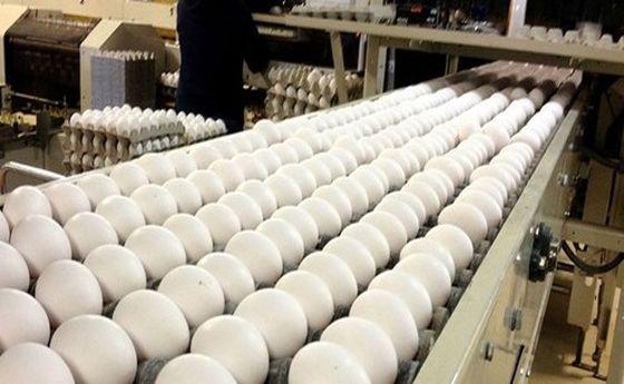 تخم مرغ دانهای ۱۵۰۰ تومان شد!