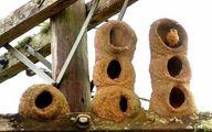 عکس: پرندهای که آپارتمان سازی میکند!