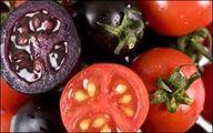 گوجه فرنگی های بنفش در راه بازار
