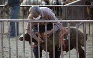 جوسازی دلالها برای جلوگیری از ارزانی گوشت +عکس