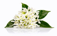 ۴ گیاه دارویی که آرامش قلب را به شما هدیه میدهد