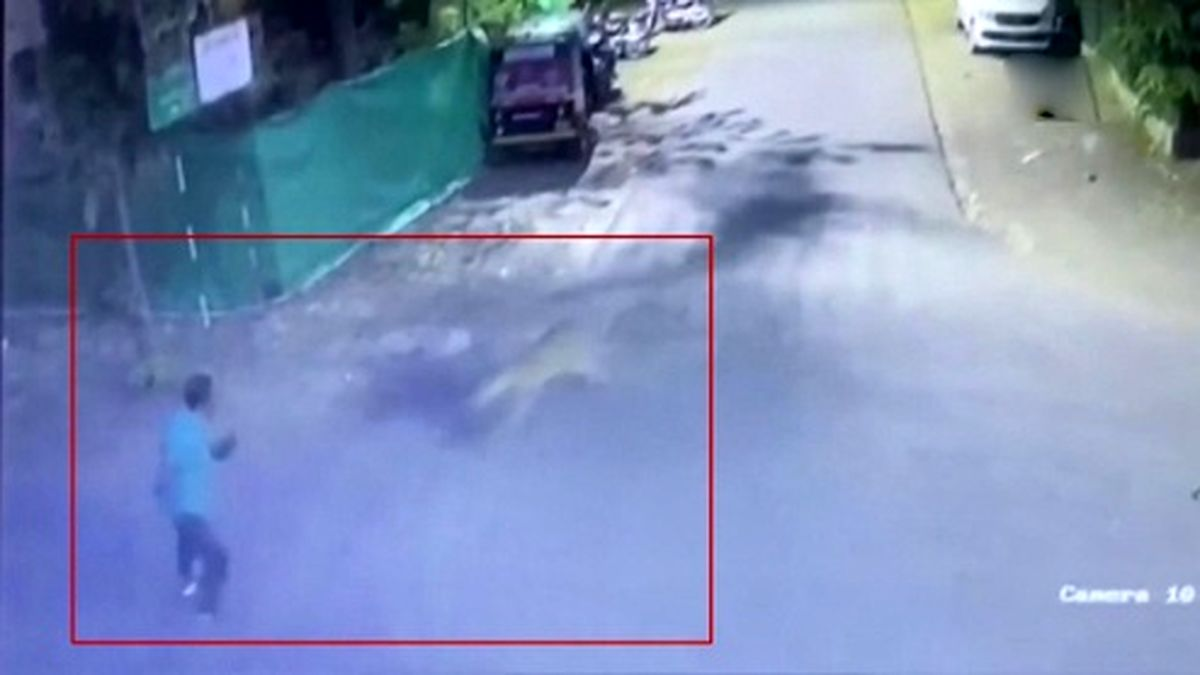 لحظه وحشتناک حمله پلنگ به عابر پیاده! +فیلم