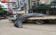 کوسه نهنگ کمیاب در خیابانهای چین +تصاویر