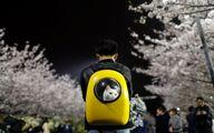 عکس: کیف مخصوص حمل گربه خانگی