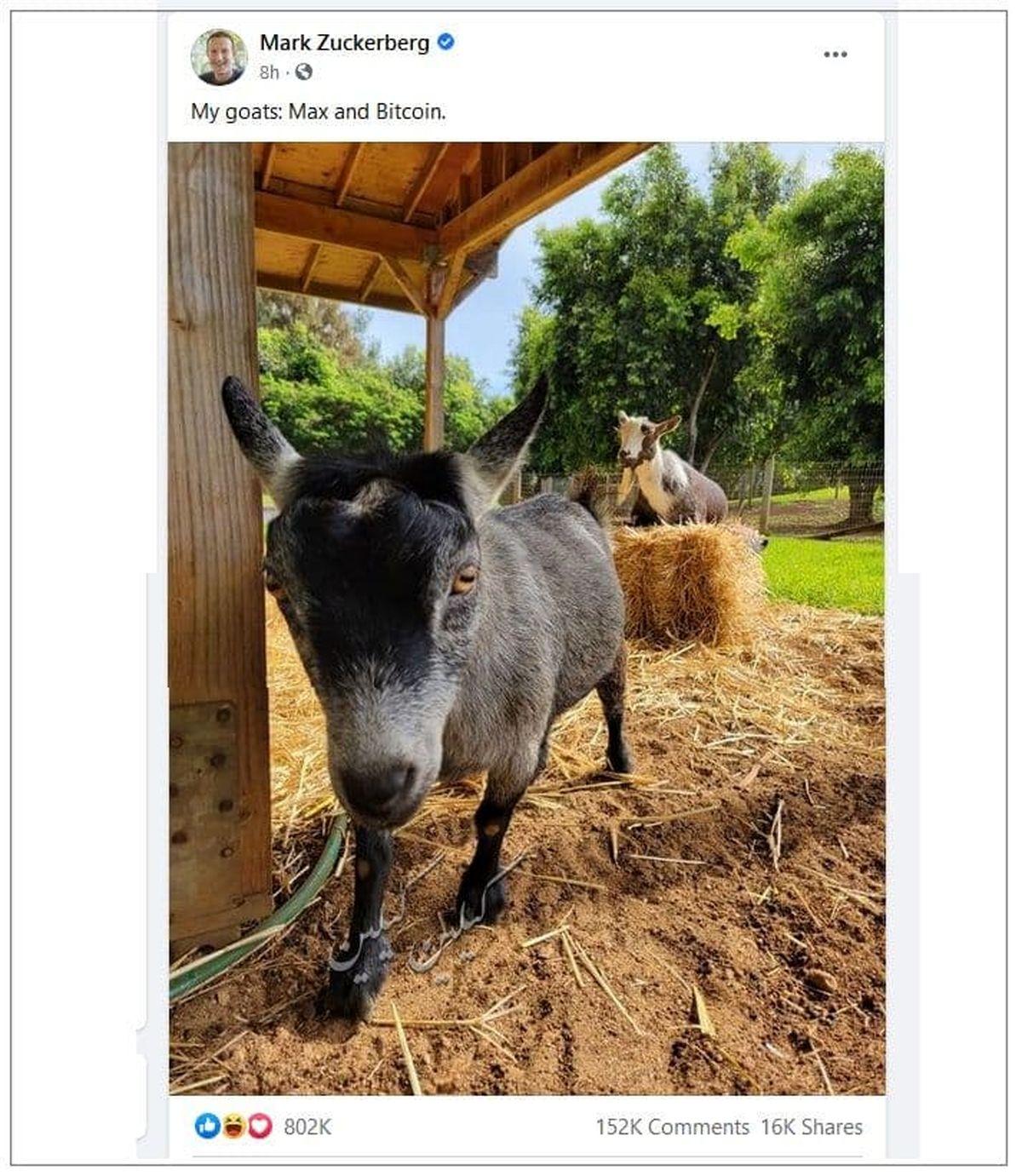 اسم های جالب حیوانات خانگی مارک زوکربرگ +عکس
