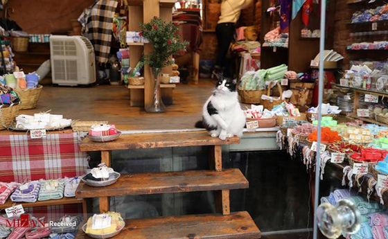 تصاویر: استانبول شهر گربهها