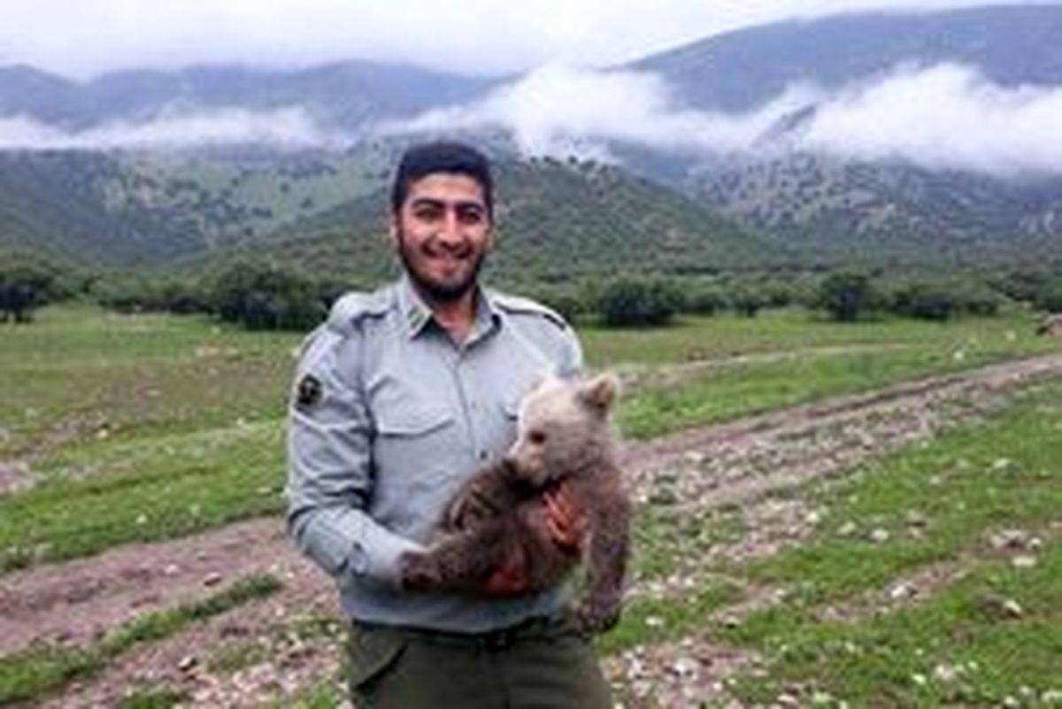 توله خرس سرگردان در «سفیدکوه» پیدا شد +تصاویر