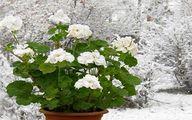 نکات کلیدی در مصرف گیاهان دارویی برای سرماخوردگیها