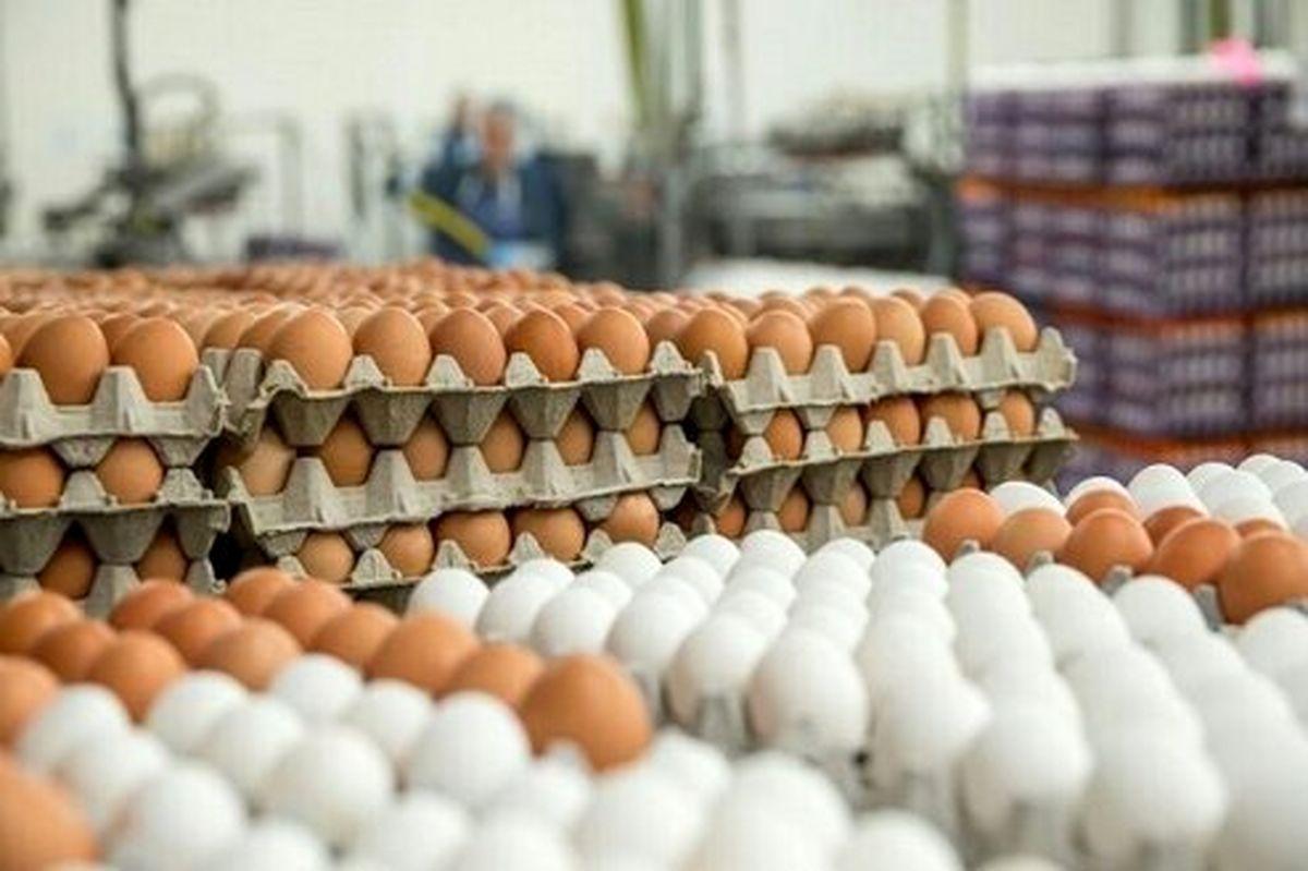 آغاز عرضه تخم مرغ شانهای +قیمت