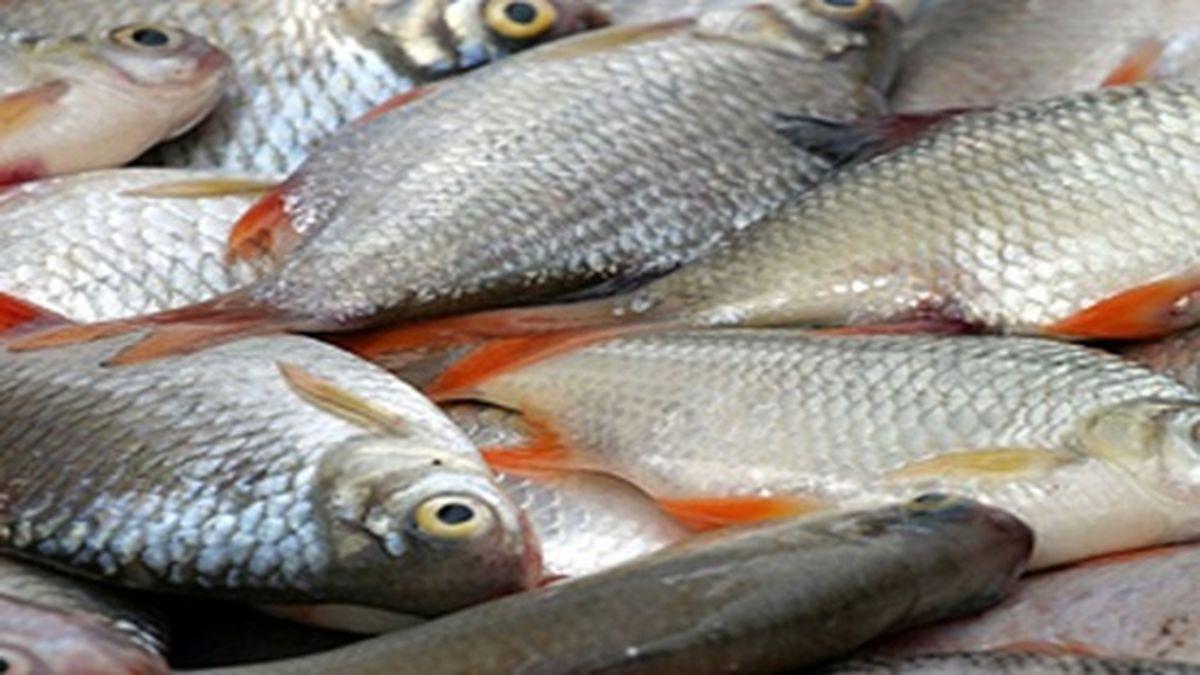 پرفروشترین ماهی در میادین تره بار پایتخت چند؟